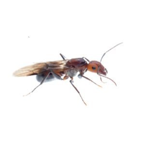 ant-treatments-irvine-ca